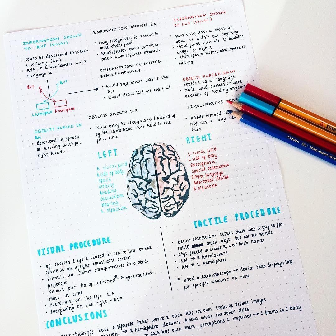 psychology notes on sperry | bujo | pinterest | psychology notes