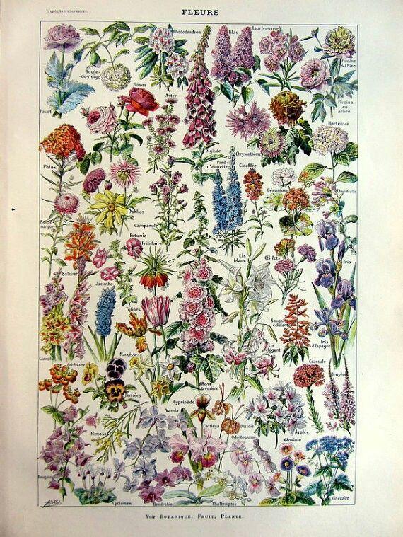 Fleurs En 2019 Illustrations De Fleurs Illustration