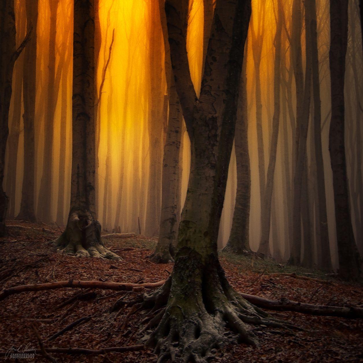 такого картинки таинственного леса нем