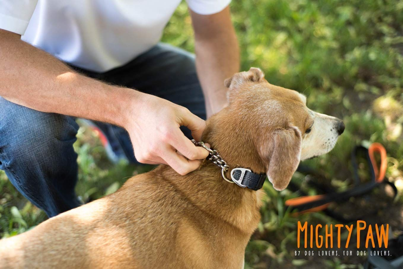 Mighty Paw Martingale Collar Training Dog Collar Limited Cinch