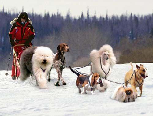 Cartoon Dogs I Would Choose For My Iditarod Team Dog Blog Dog
