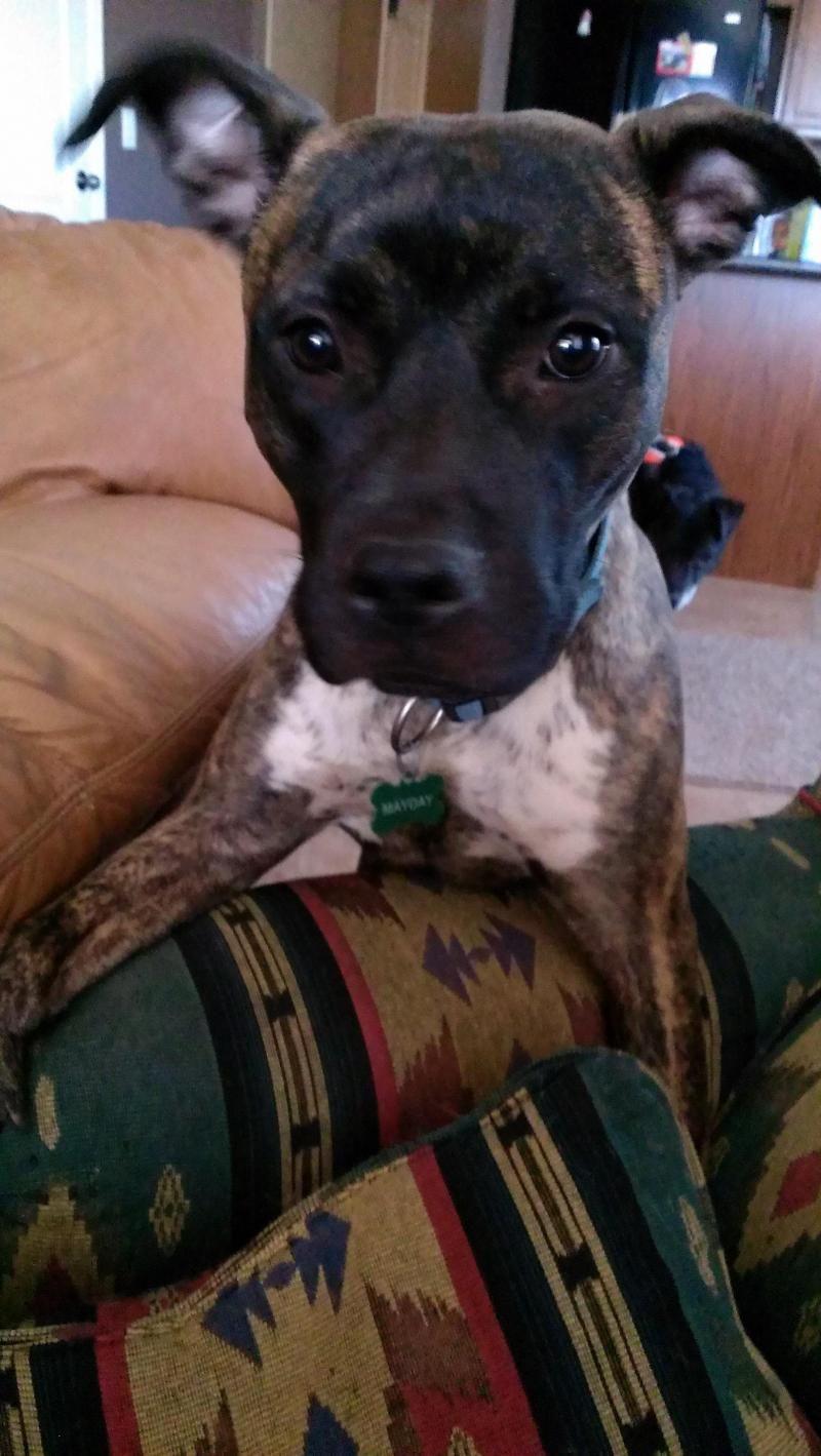 Adopt Hobbs on (With images) Dog adoption, Pet adoption