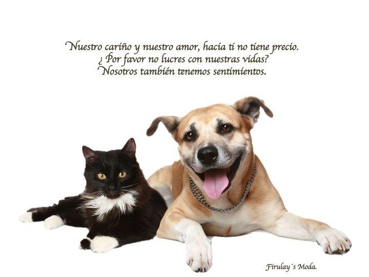 Perros O Gatos Al Igual Tiene Los Mismos Sentimientos