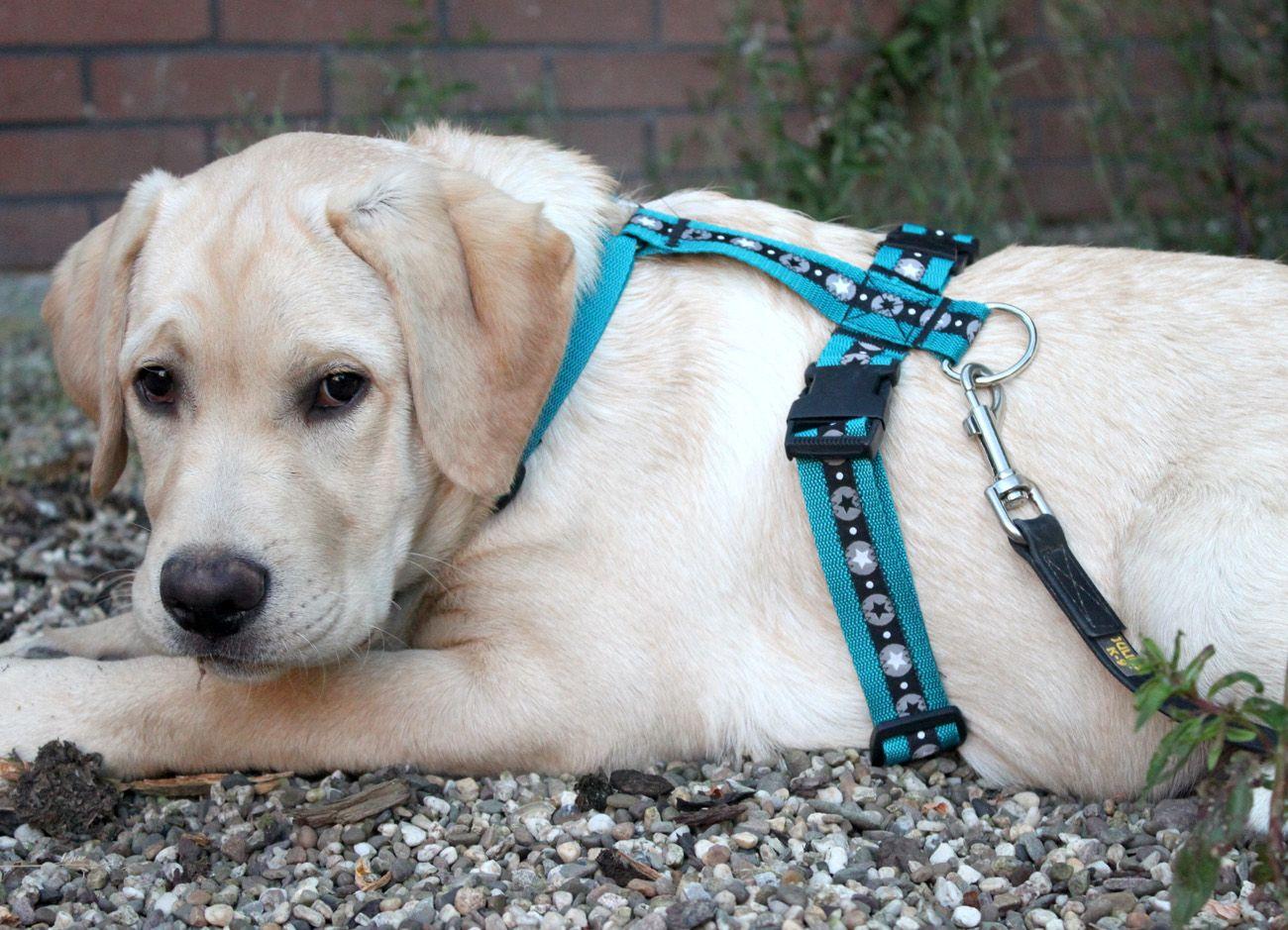 Hundegeschirr selber nähen / Pepelinchen | Hundegeschirr | Pinterest