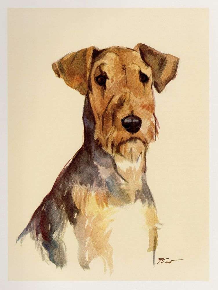 Vintage AIREDALE TERRIER Dog Print Gallery Wall Art Beautiful Art ...