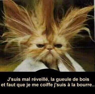 Photo Rigolote 1 Tout Les Jours Photo Chat Drole Chat Drole Chats Droles