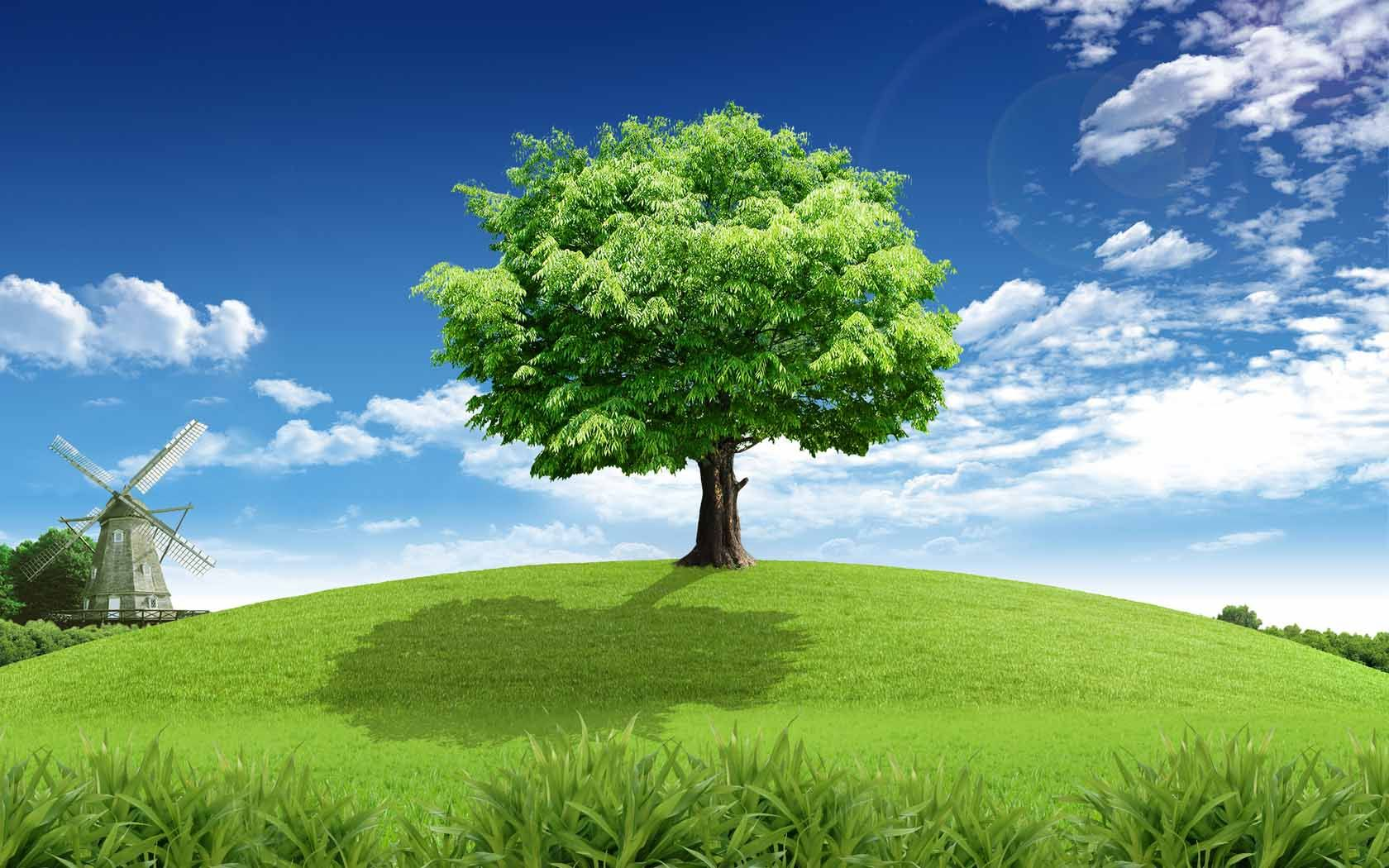 Картинки деревьев на фоне неба