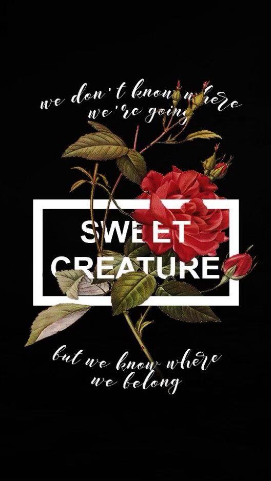 ️ sweet creature Harry styles quotes, Harry styles