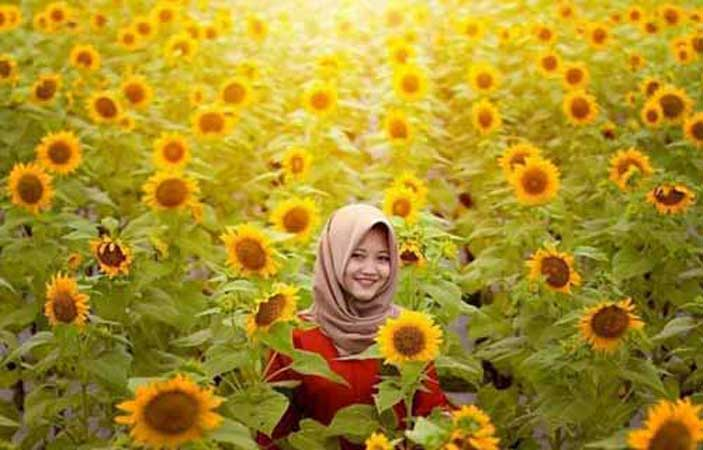 Wisata Kebun Matahari Kediri