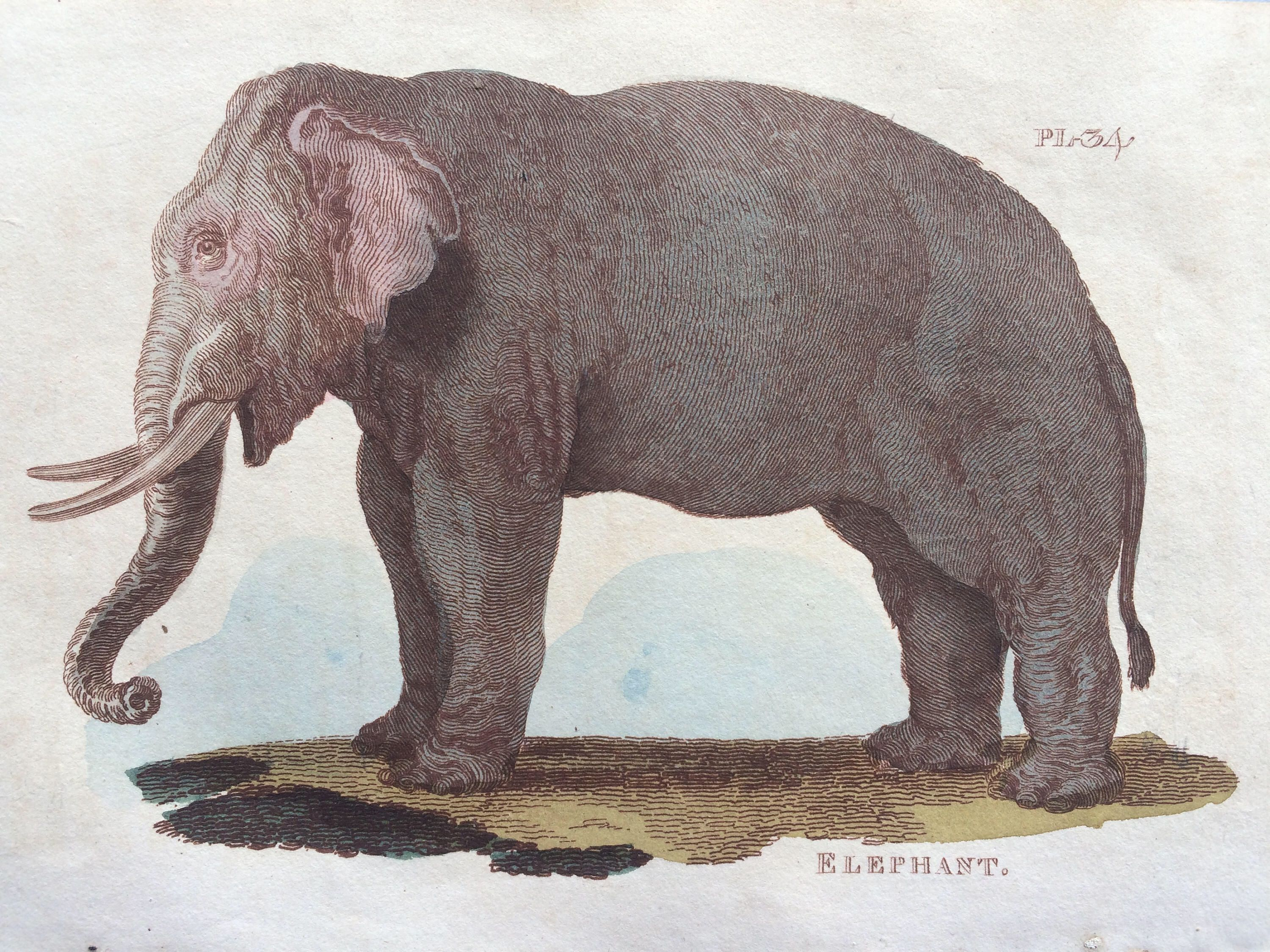 1811 original antique hand coloured engraving elephant 1811 original antique hand coloured engraving elephant wildlife wall decor zoology decorative art amipublicfo Image collections