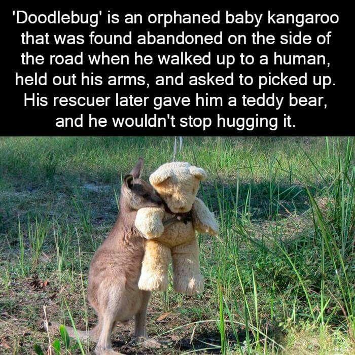 sjove fakta om dyr