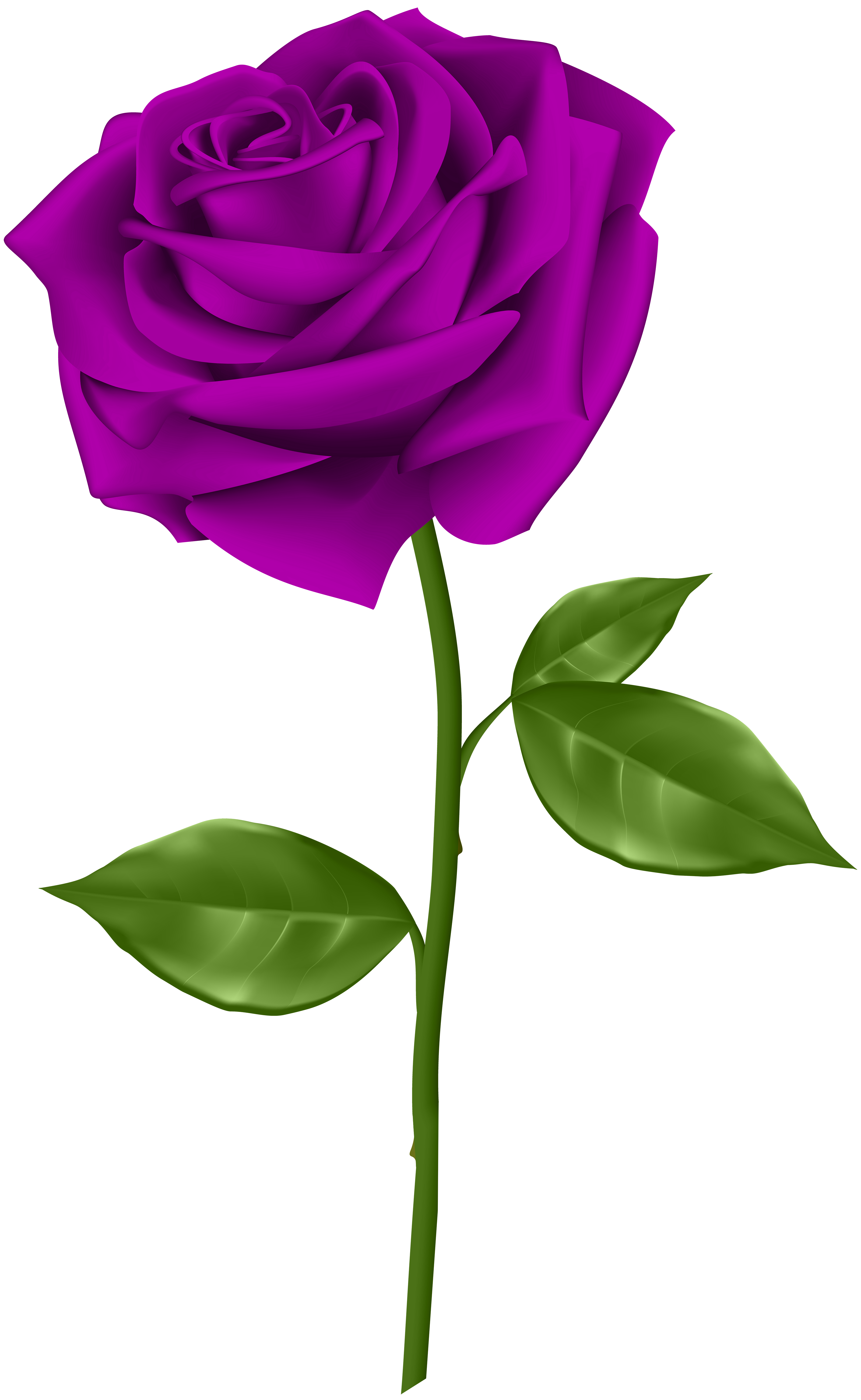 Purple Roses Background Images: Red Roses, Purple Roses, Red