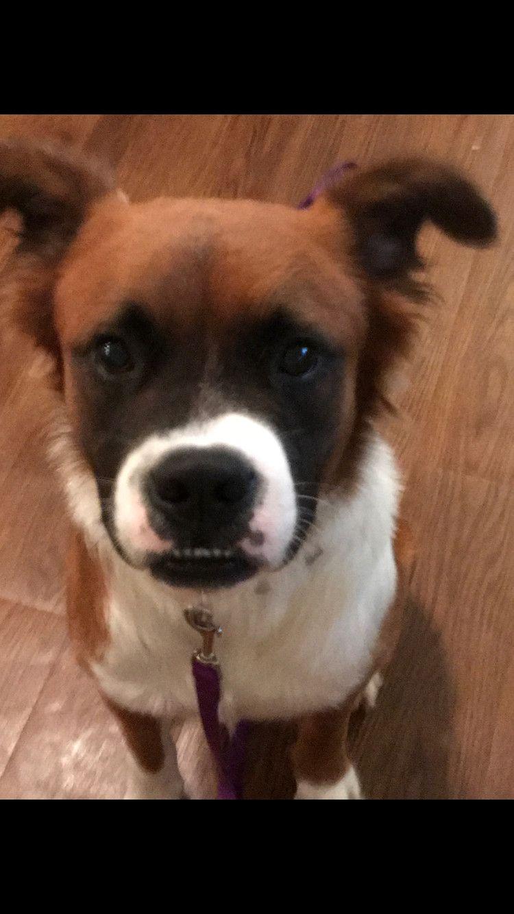 Adopt Obi on Shepherd mix dog, Pets, Animal rescue