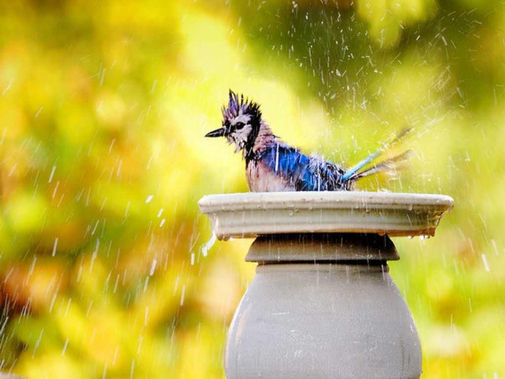 Pin by Anne on Beautiful | Dancing in the rain, Rain