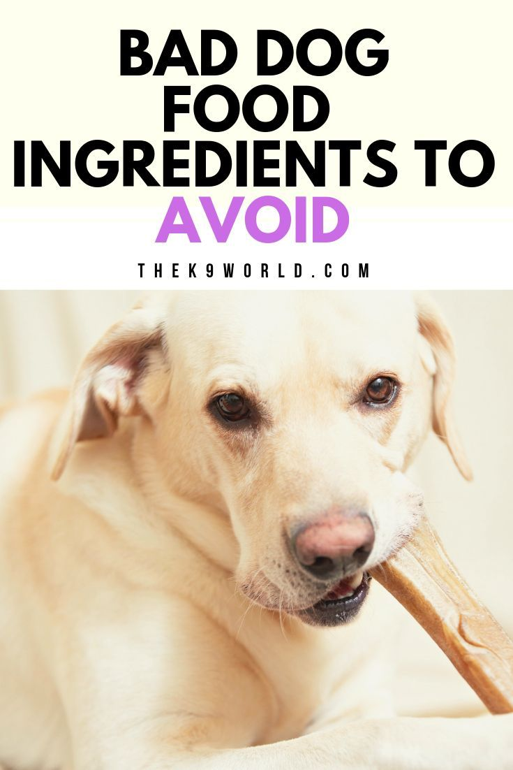 Worst Dog Food To Avoid Dog Food Dog Food Recipes Dog