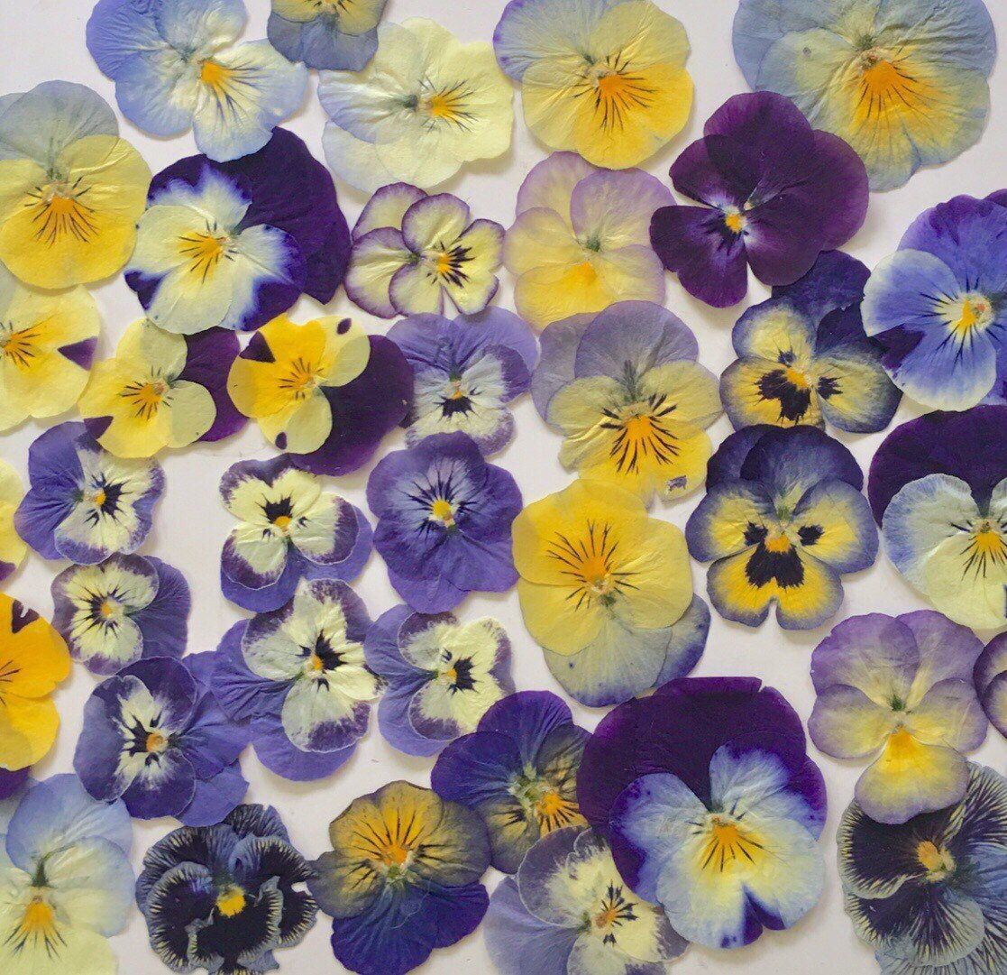 30 Pressed Pansy Flowers For Crafting Resin Free Shipping Etsy In 2020 Pressed Flower Crafts Pressed Flower Art Resin Crafts