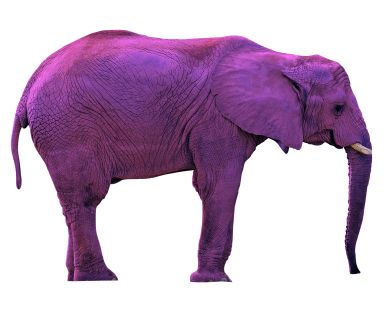 Image result for purple elephant