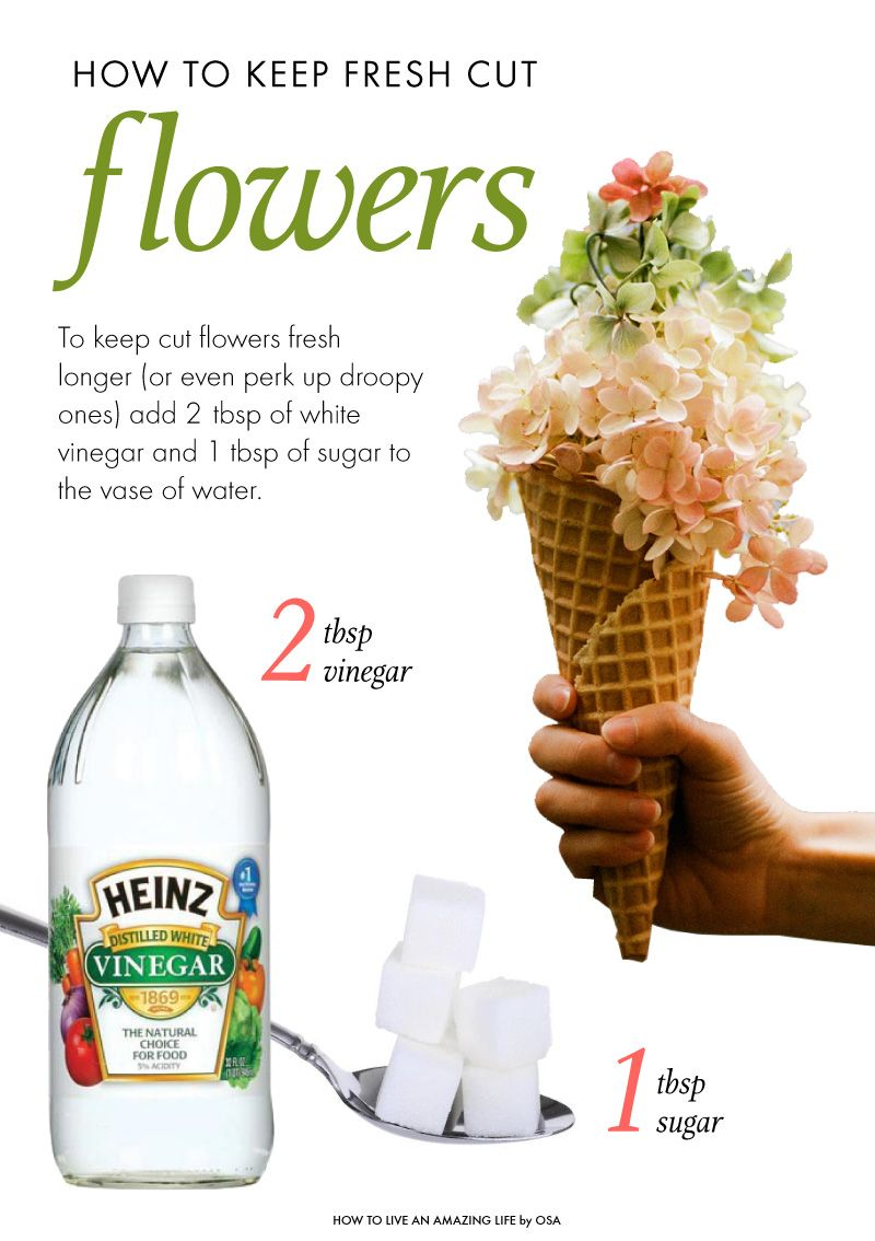 How to keep flowers fresh after theyre cut flowers pinterest cut flower garden reviewsmspy