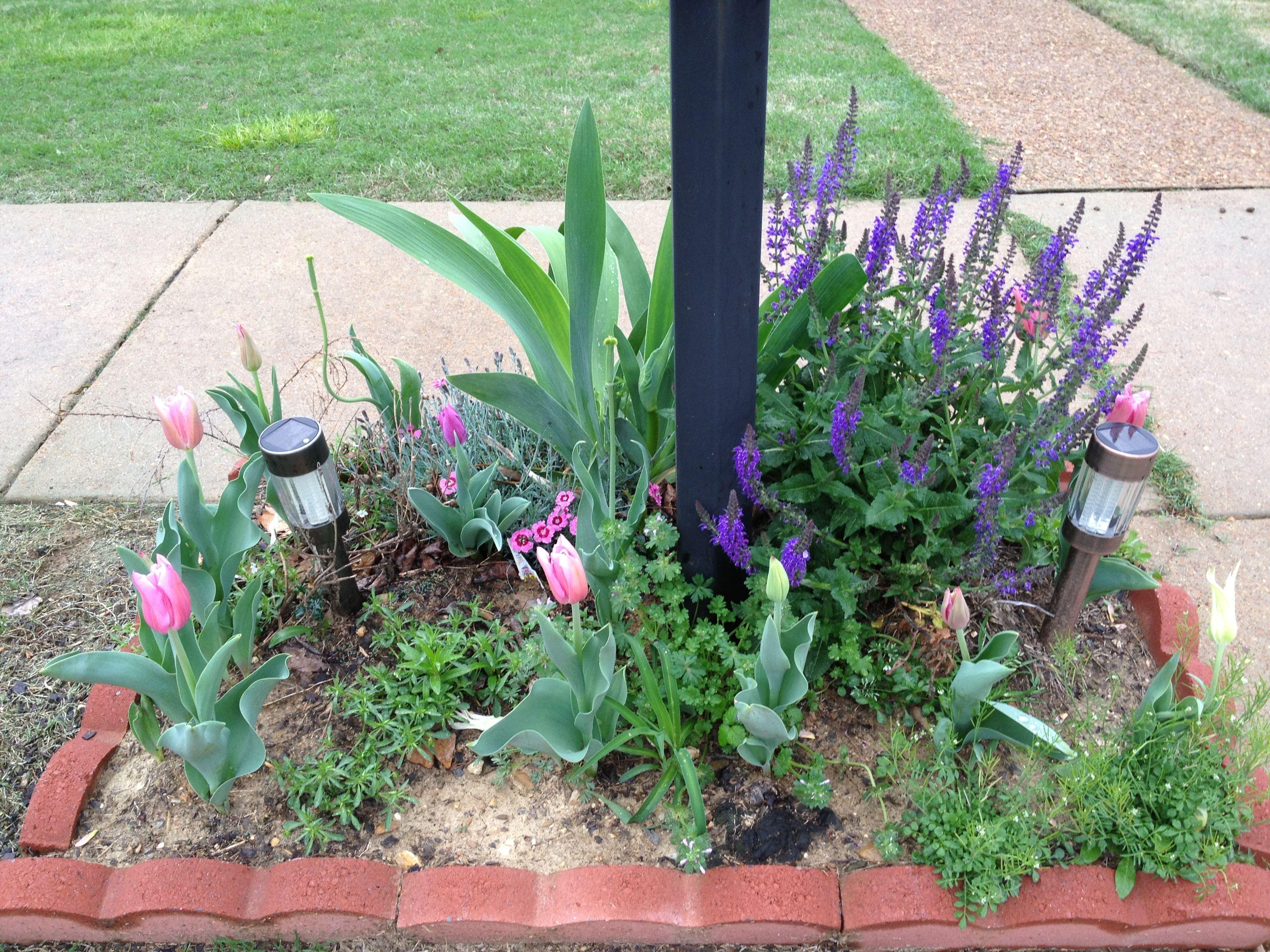 mailbox flowers gardens pinterest