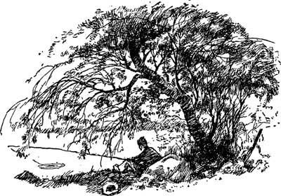 Weeping Willow Tree Black And White Tattoo free public domain ima...
