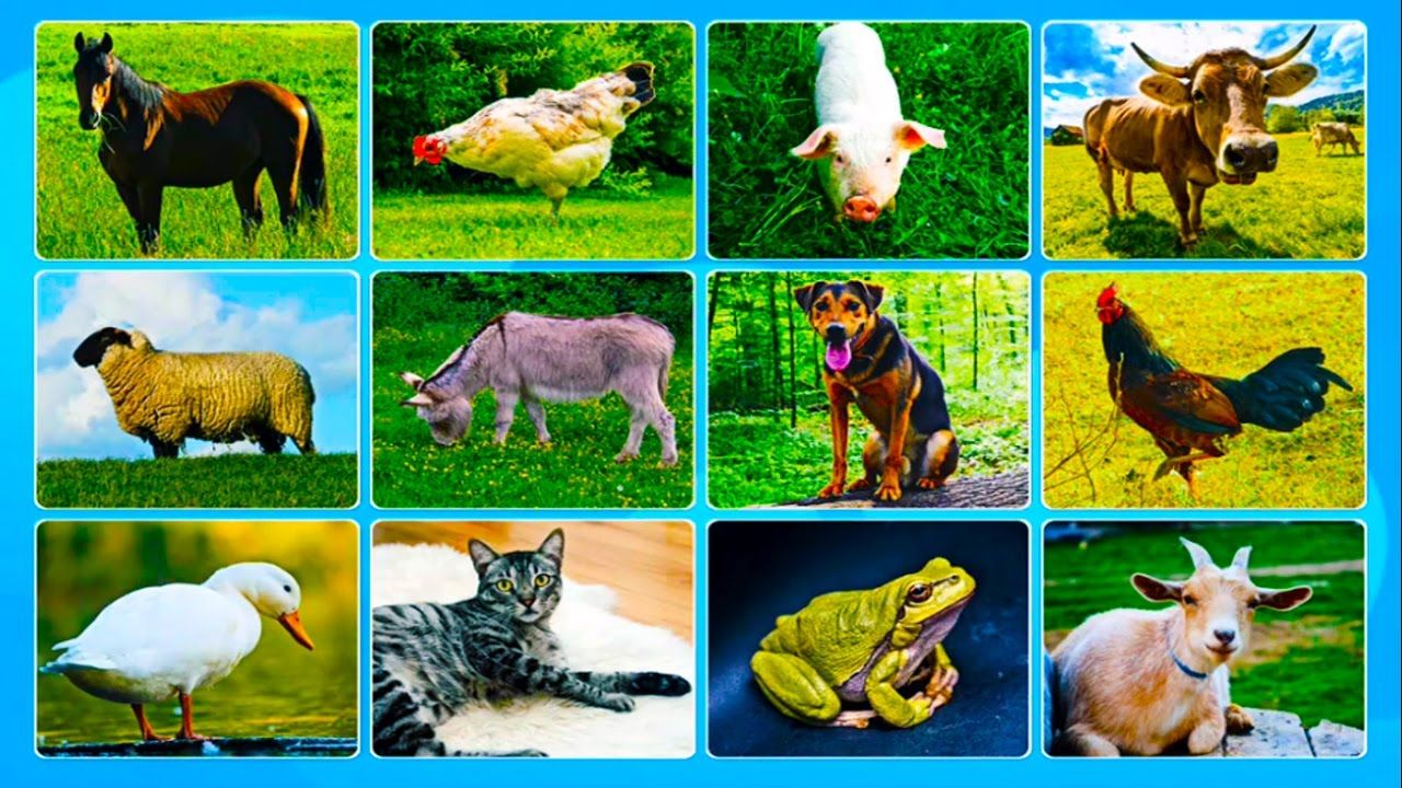 Learning Domestic Animals Names and Sounds Learn Domestic