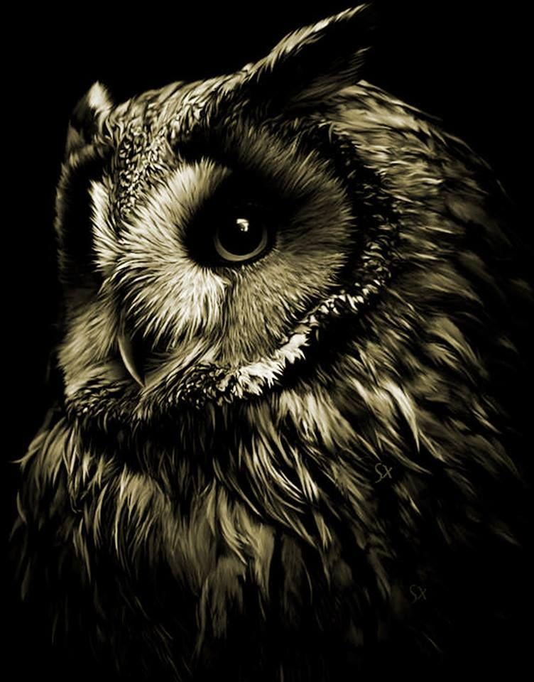 Photo of Beautiful owl                                                                   …