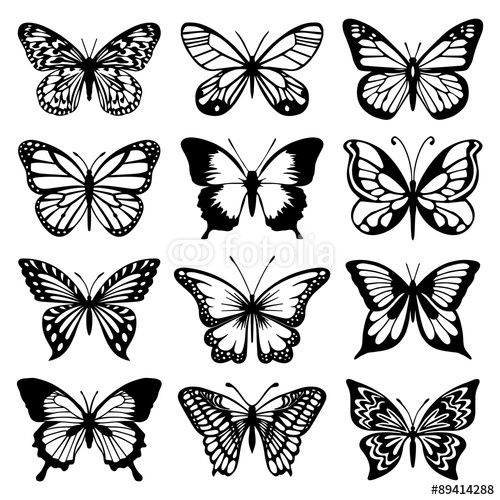 Vector Butterfly Vector Set Butterfly Drawing Butterfly Outline