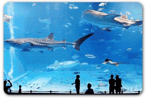 30 jobs in the PR and marketing world | Big aquarium ...