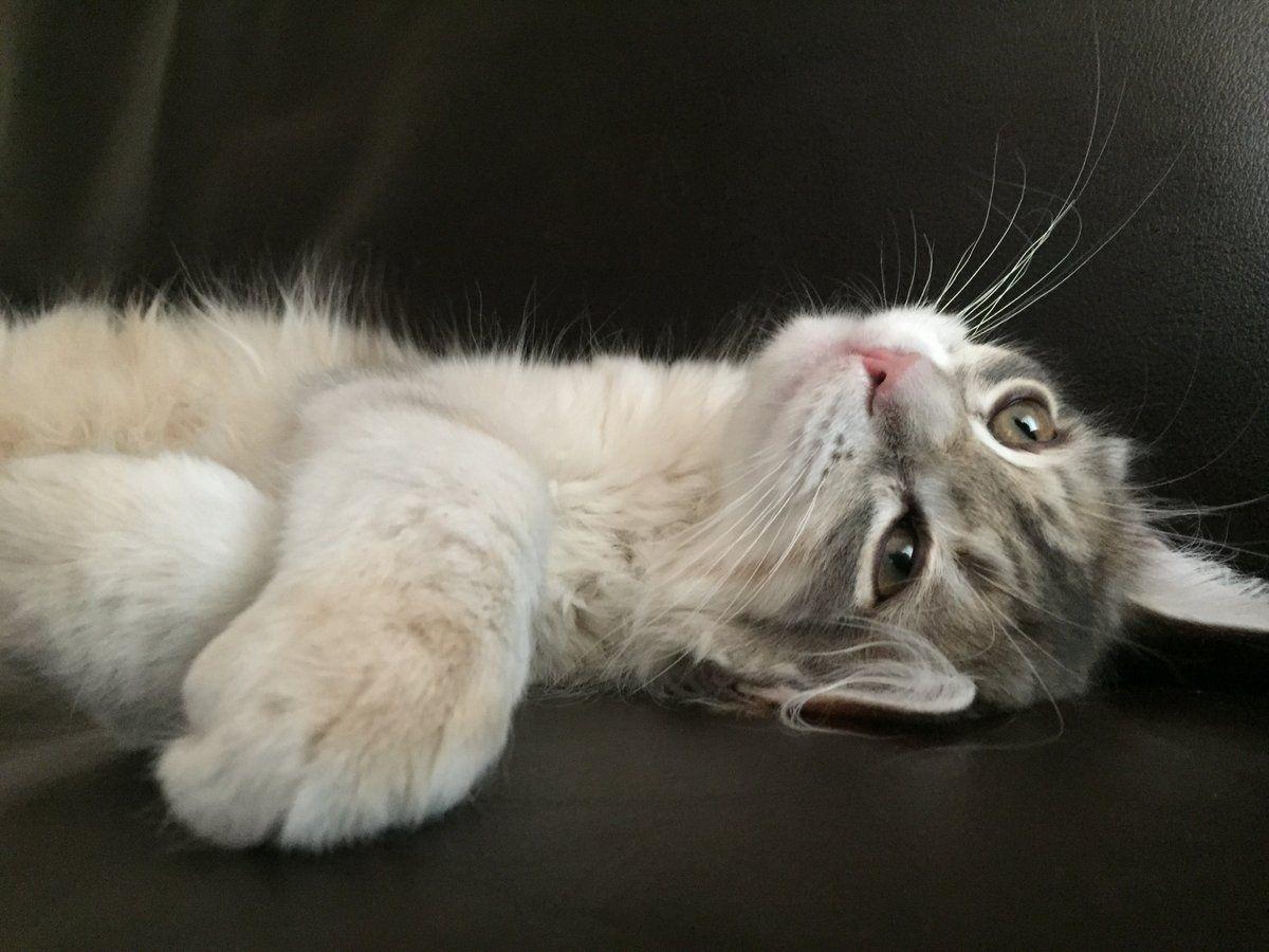 Park Art|My WordPress Blog_Maine Coon Kittens For Sale Vancouver Washington
