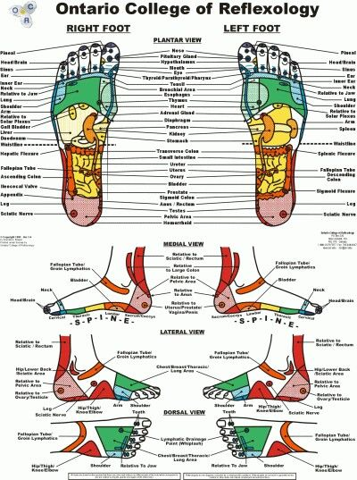 Foot And Ankle Reflexology