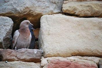 Come allontanare i piccioni dal balcone? Ecco alcuni consigli