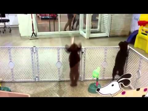 Here S A Super Cute Dog Dancing Salsa This Will Make You Laugh