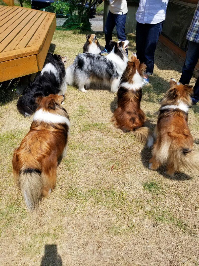 愛犬ナナとお気楽ガーデニング (With images) Dog training near me, Dog