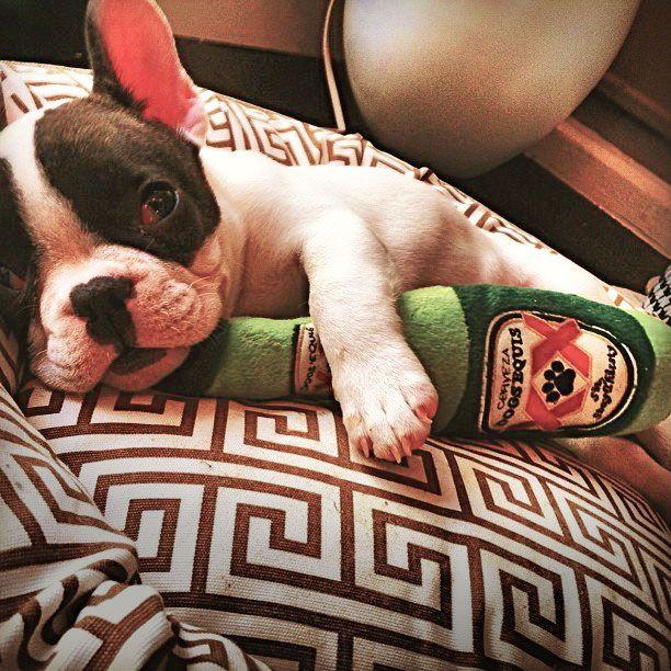 Dogs Equis Beer Bottle Dog Toy Dog Toys Plush Dog Toys Fancy Dog