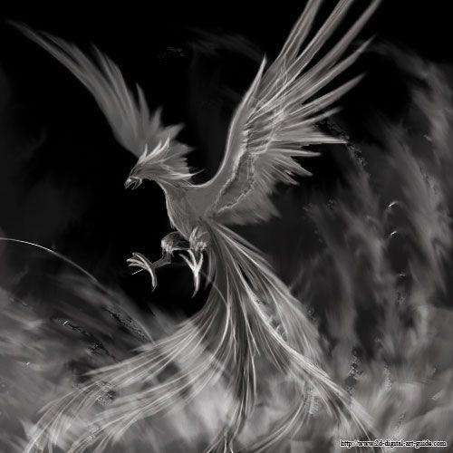 Phoenix Bird Drawings Phoenix Bird Pictures To Draw