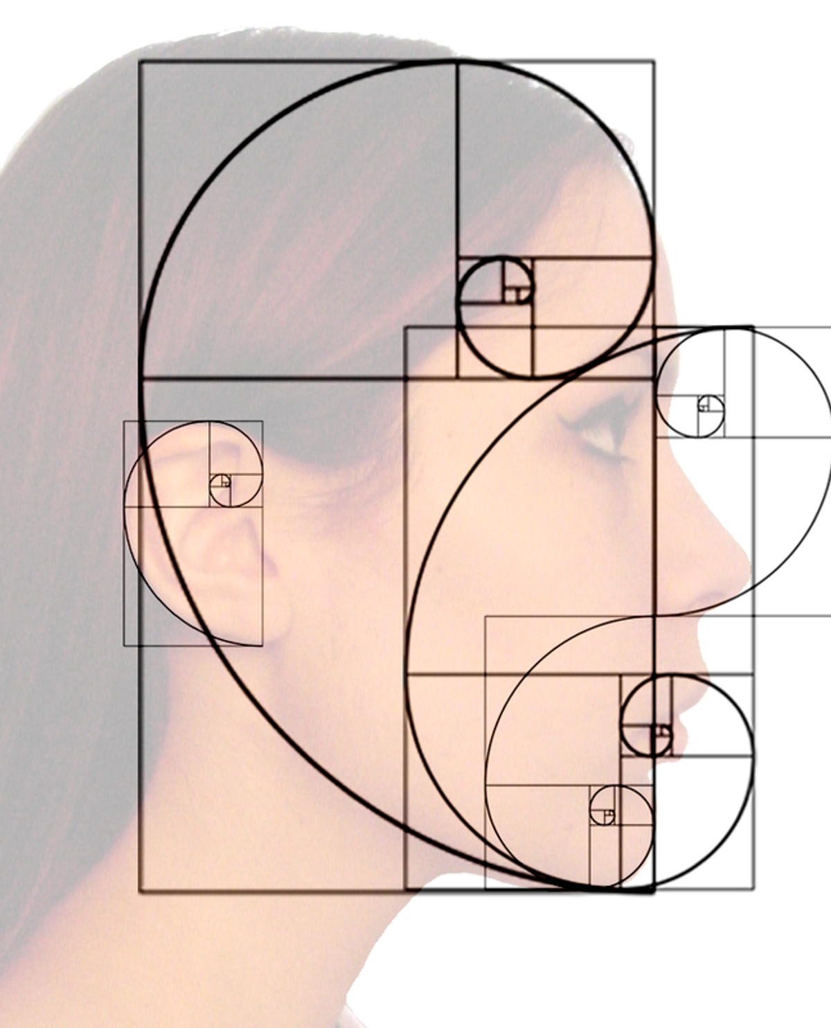 7 Beautiful Examples Of The Fibonacci Sequence In Nature