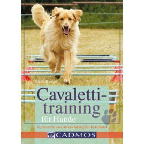 Cavalettitraining Fur Hunde Hunde Beschaftigung Fur Hunde Hunde Hundetraining