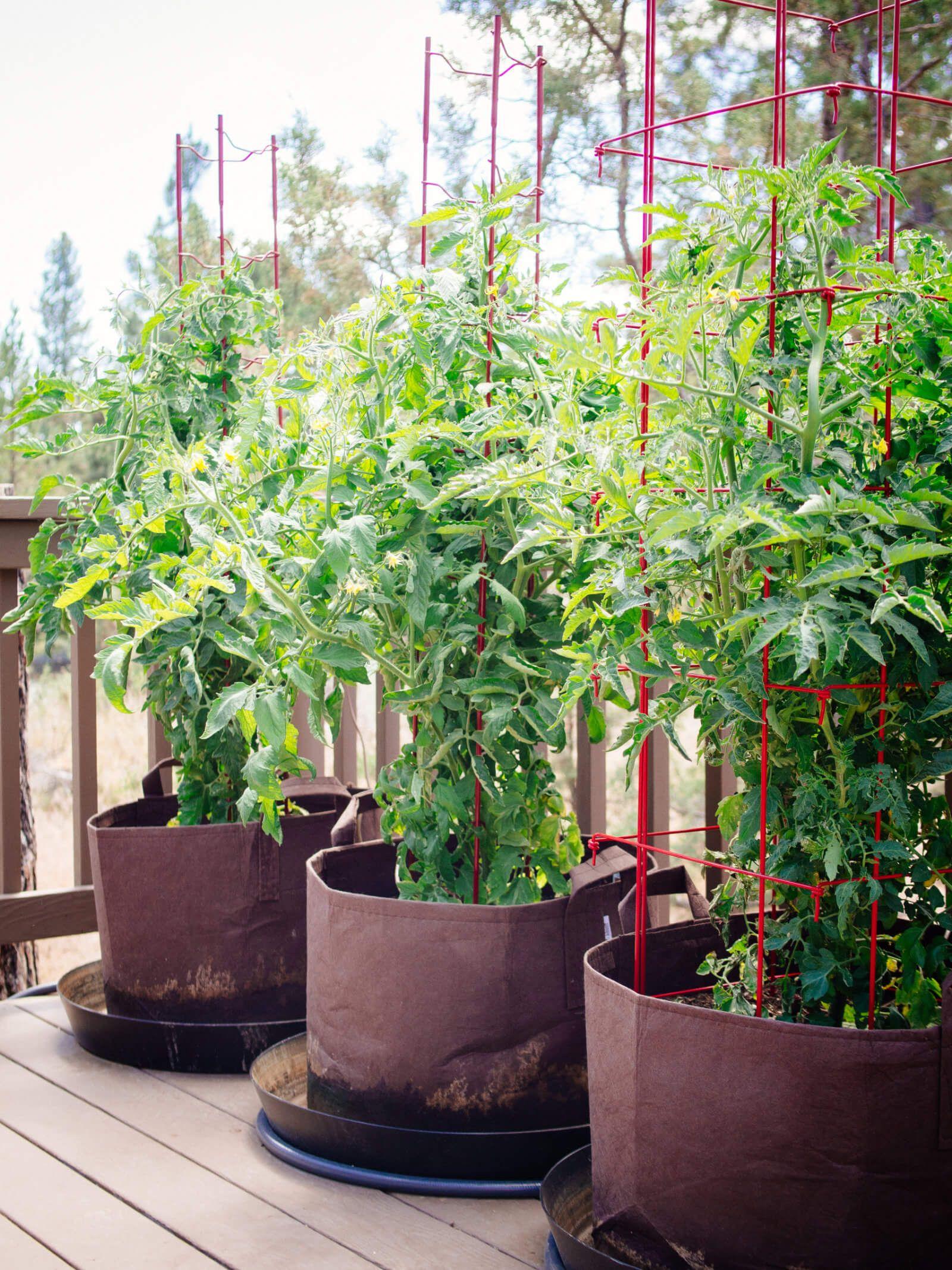 Pin On Veggie Gardening