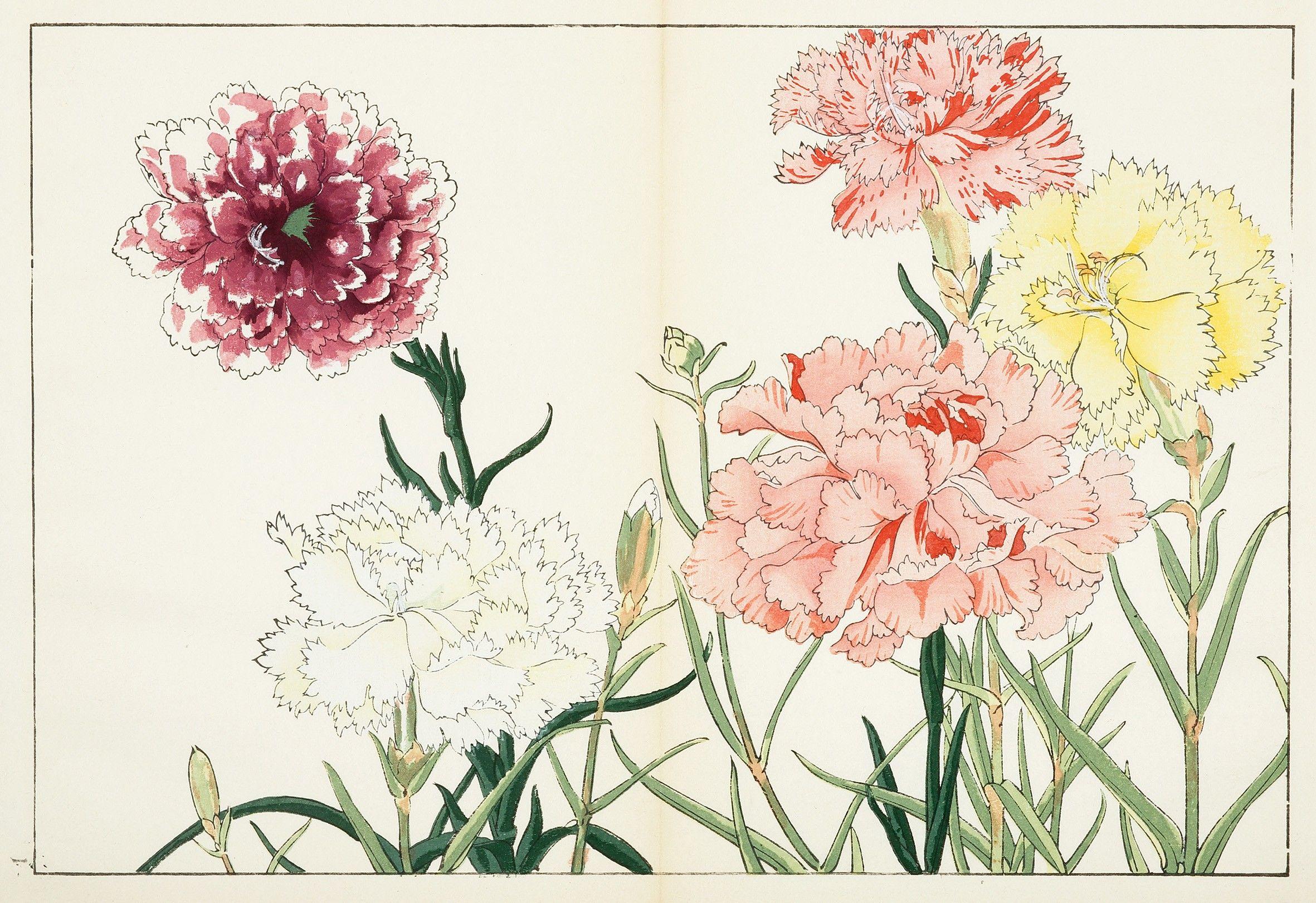 Carnation Antique Print Map Room Flower Illustration Japanese Art Styles Japanese Painting