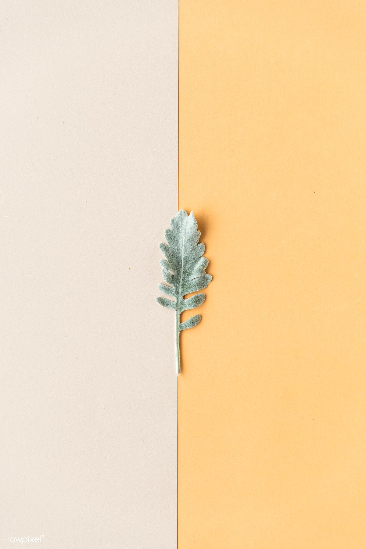 Download premium image of Blank two tone card template mockup by Ake about envelope card, aerial, beautiful, bloom, and blossom 1204398