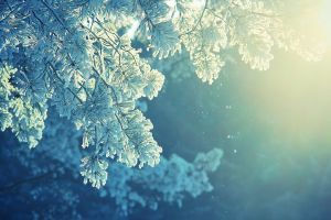 Frost Snow Winter Cold Sunlight Peaceful