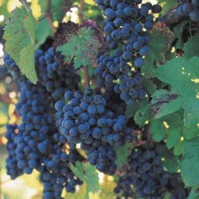 How To Build A Sturdy Grape Arbor