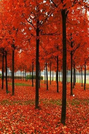 Leaves Falling Lwp For Android Fall Wallpaper Android Photography Wallpaper