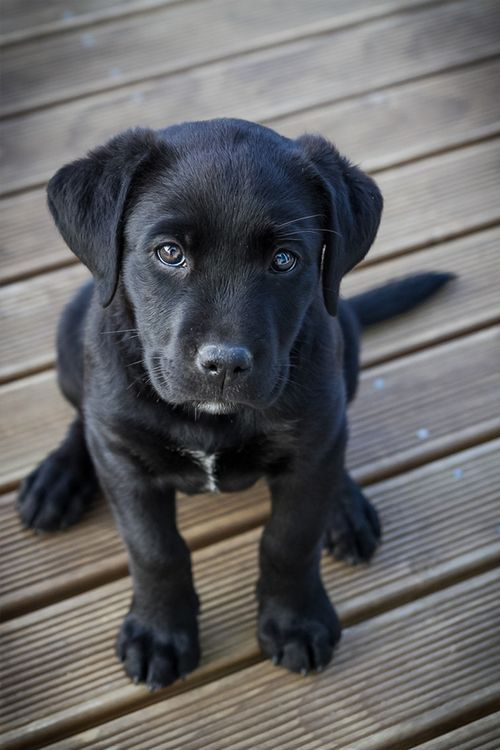 Most Inspiring Sad Black Adorable Dog - aac00fa5d5f6c5b0d09dc66767aecaa2  Trends_3658  .jpg