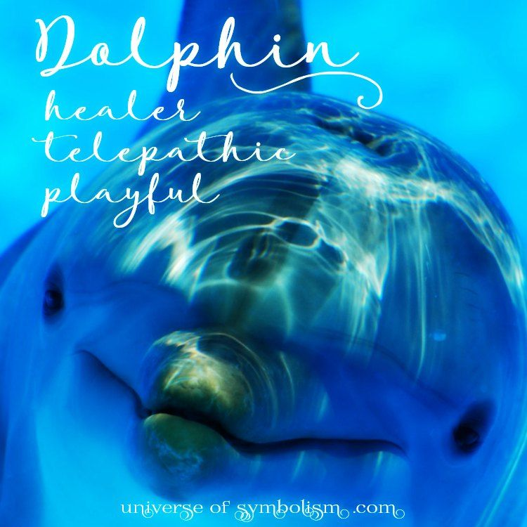Dolphin Spirit Totem Power Animal Symbolism Meaning Dream