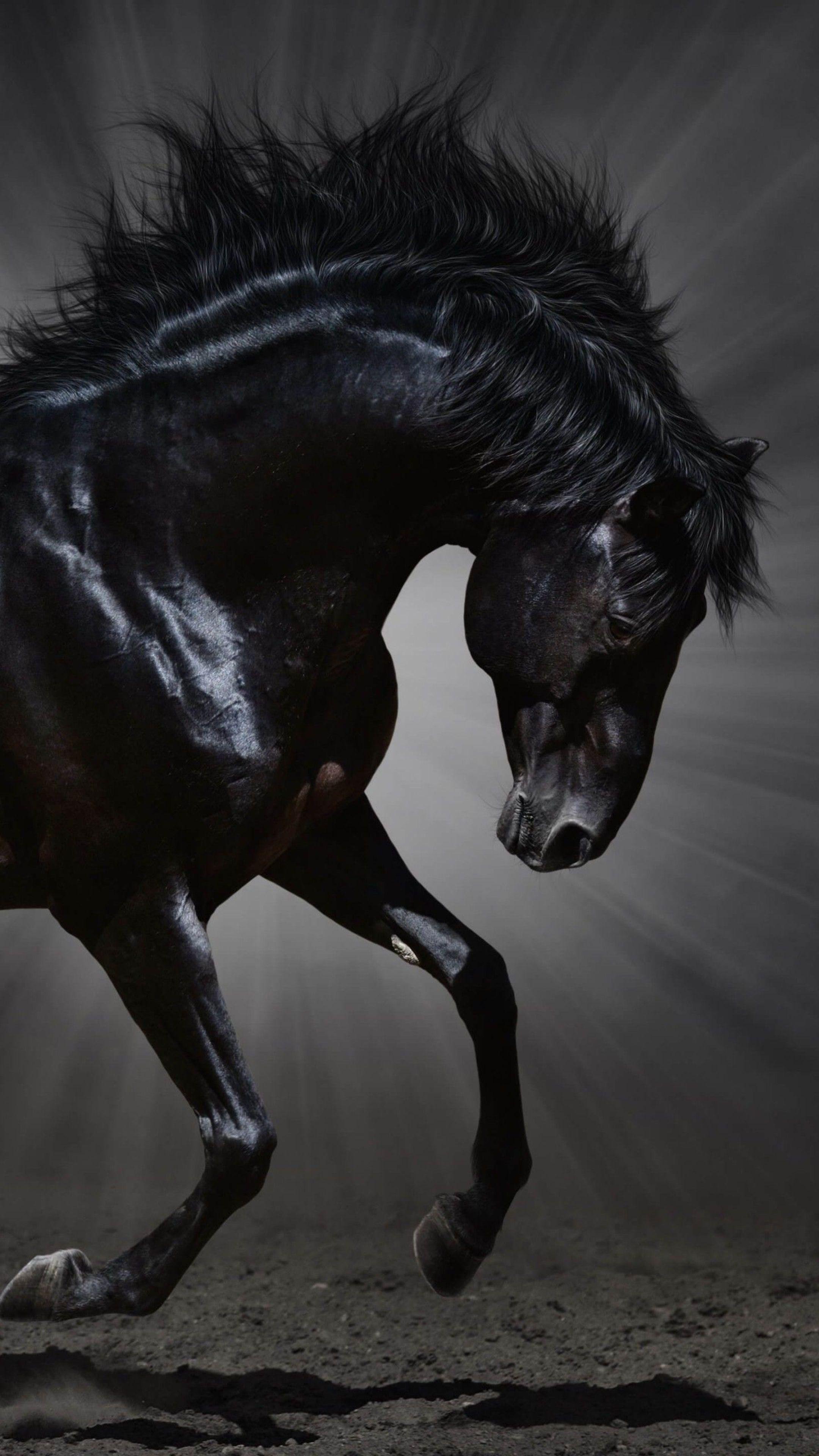 Cool Wallpaper Horse Samsung Galaxy - aac0702c5a45353ccdbc5e0250b5a544  Snapshot_381134.jpg