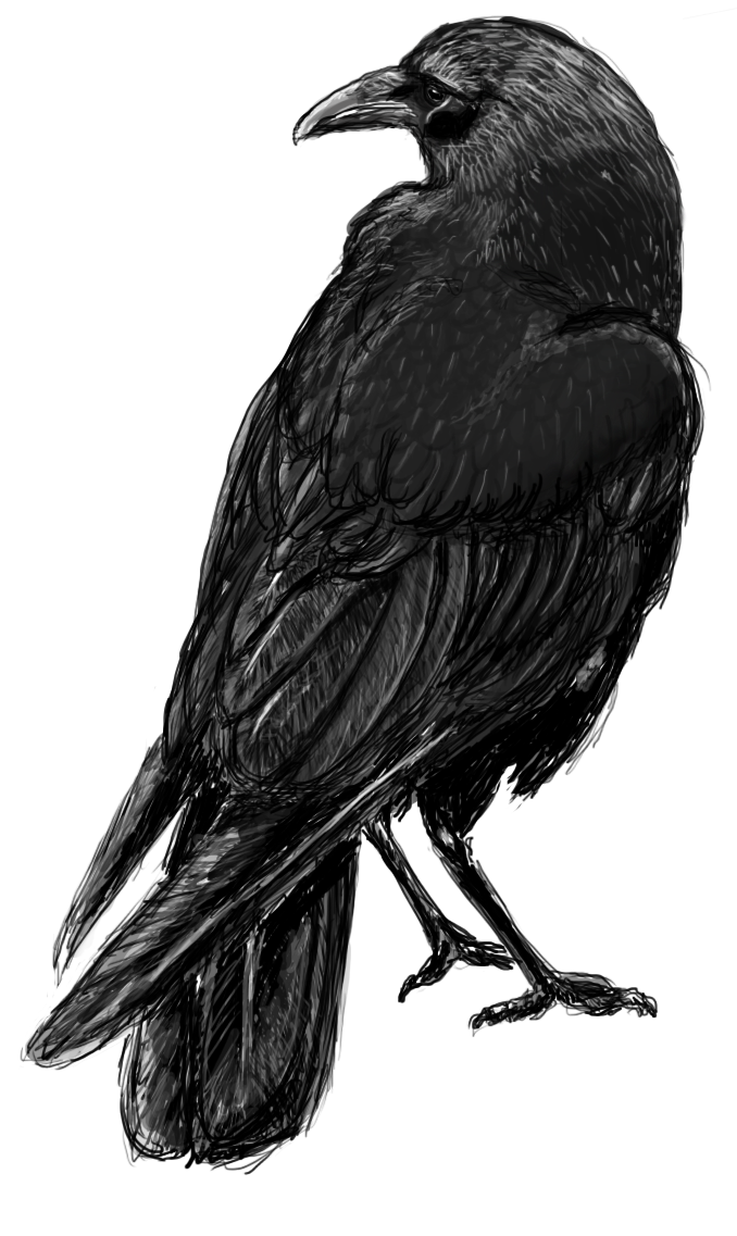 Digital crow sketch my art pinterest crows for Raven bird tattoo