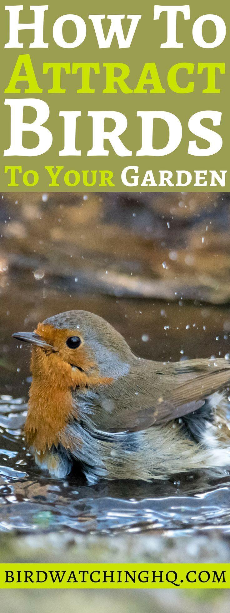 Birds In The Garden: 10 PROVEN Tips to Attract & Deter #backyardoasis