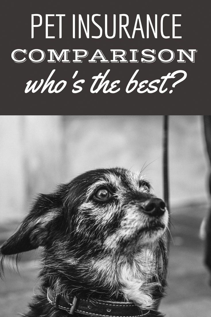 Pet Insurance Comparison Who's Best Dog care dog