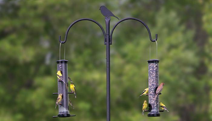 Advanced Pole System Wild Birds Unlimited Wild Birds Unlimited Wild Birds Unlimited Best Bird Feeders Wild Birds